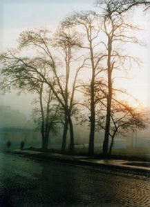 trees 0