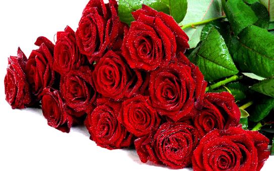Buket-fresh-red-roses-Flower-Wallpaper-Hd-1920x1200